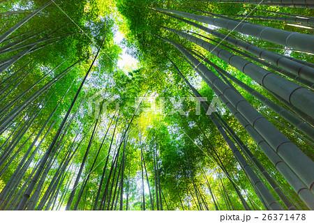 秋の鎌倉 報国寺 26371478