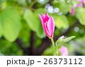 お花 フラワー 咲く花の写真 26373112