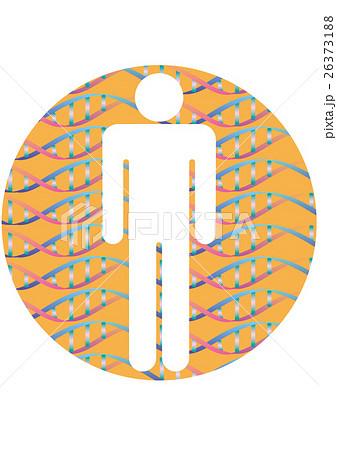 人体シルエットと二重螺旋構造パターン  のイラスト素材 [26373188] - PIXTA