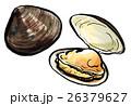 蛤 貝 二枚貝のイラスト 26379627