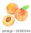 あんず 果物 杏のイラスト 26383544