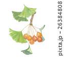 銀杏 いちょう 実のイラスト 26384808