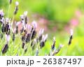 ミツバチと花 26387497