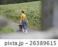 農業体験 一輪車を押す女性 26389615