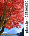 精進湖、湖畔の紅葉と富士山 26390920