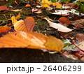 自然の営み・落ち葉 26406299