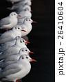 カモメ 鴎 海鳥の写真 26410604
