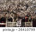 太宰府天満宮本殿前の飛び梅の花 26410799