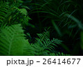 シダ 植物 葉の写真 26414677