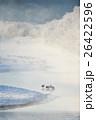 樹氷と霧に囲まれた厳冬期のタンチョウ 26422596