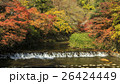 八瀬 紅葉 秋の写真 26424449