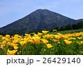 カリフォルニアポピー 花菱草 夷守岳の写真 26429140