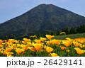 カリフォルニアポピー 花菱草 夷守岳の写真 26429141