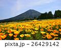 カリフォルニアポピー 花菱草 夷守岳の写真 26429142