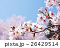 桜 26429514