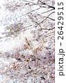桜 26429515