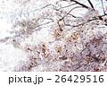 桜 26429516