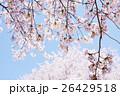桜 26429518