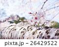 桜 26429522
