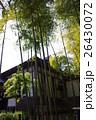 足利学校の竹 26430072