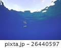 ウミガメ 26440597