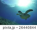 ウミガメ 26440844