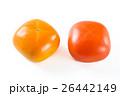 完熟前後の柿の実 26442149