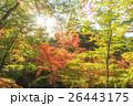 北野天満宮の紅葉 26443175