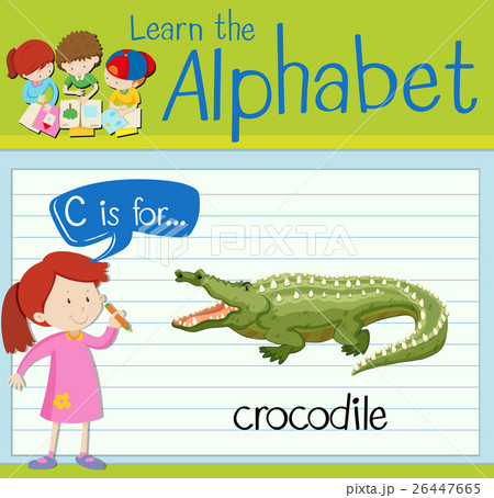 Flashcard letter C is for crocodileのイラスト素材 [26447665] - PIXTA