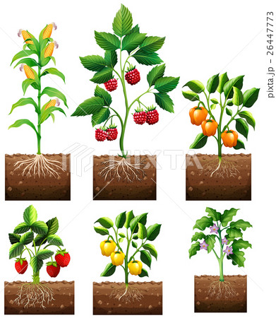 Different kinds of plant in gardenのイラスト素材 [26447773] - PIXTA