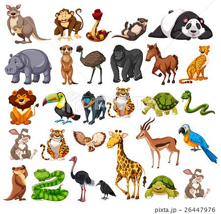 different types of wild animals on whiteのイラスト素材 26447976