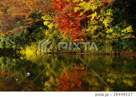 紅葉を映す川面 嵐山渓谷 e 26449527
