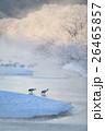 朝日に染まる樹氷とタンチョウ 26465857