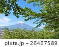 富士山 新緑 葉桜の写真 26467589
