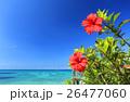 沖縄 青い海と青い空と赤いハイビスカス  26477060