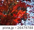 紅葉 26479788