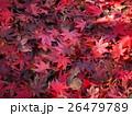 紅葉 26479789