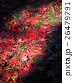 紅葉 26479791