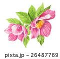 花 クリスマスローズ キンポウゲ科のイラスト 26487769