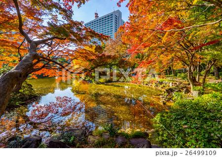 【東京都】秋の都市風景 26499109