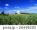 南大東島の風景 26499292