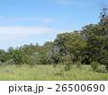 アフリカの自然 26500690