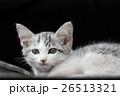 子猫 かわいい 動物の写真 26513321