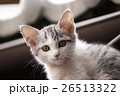 子猫 かわいい 動物の写真 26513322
