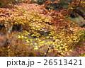 紅葉 秋 楓の写真 26513421