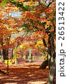紅葉 秋 楓の写真 26513422