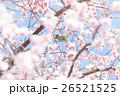 春のメジロ 26521525