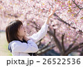 高校生と桜イメージ 26522536