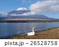 富士山 白鳥 鳥の写真 26528758