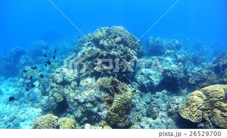 沖縄 阿嘉島の水中撮影 26529700